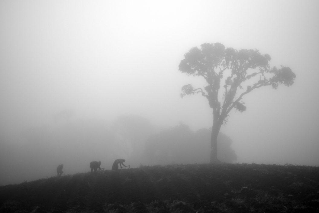 Fantasmas x 3 - La niebla cubre el Páramo