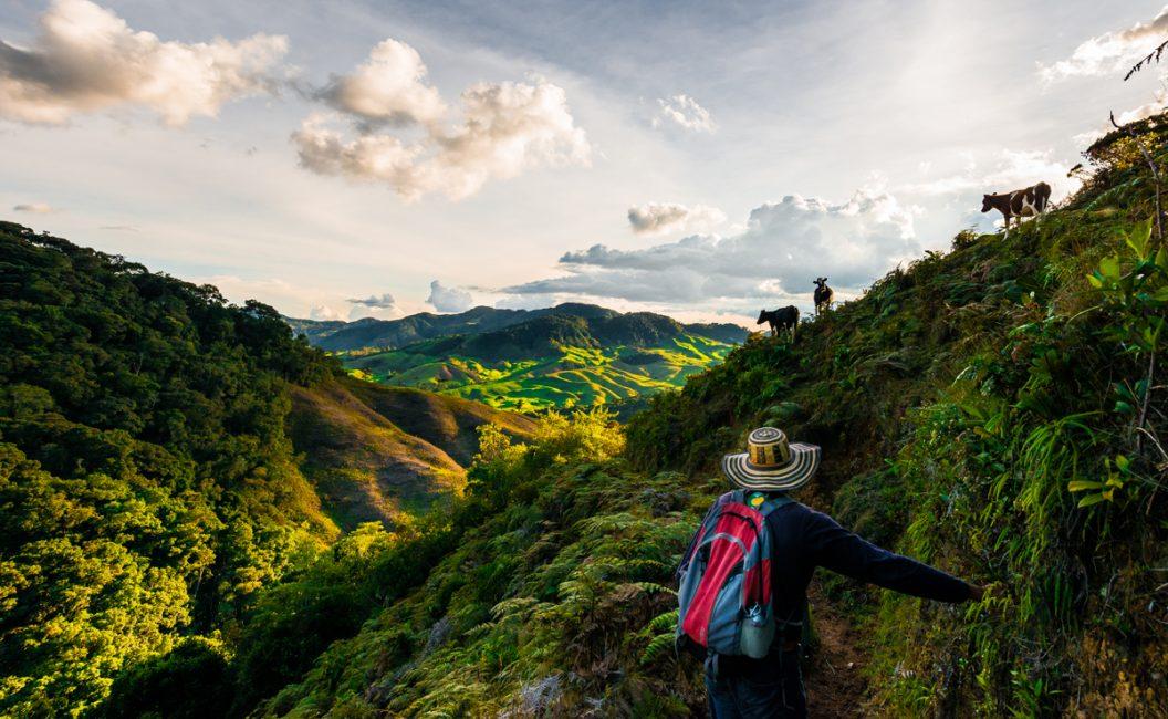 Salvaguardando el páramo colombiano (serie x5)