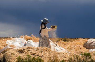 Venteando la quinua - Alejandro Loayza Grisi - Bolivia